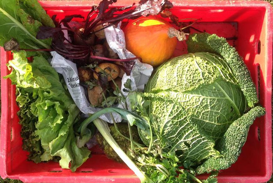 Gemüsekiste_total